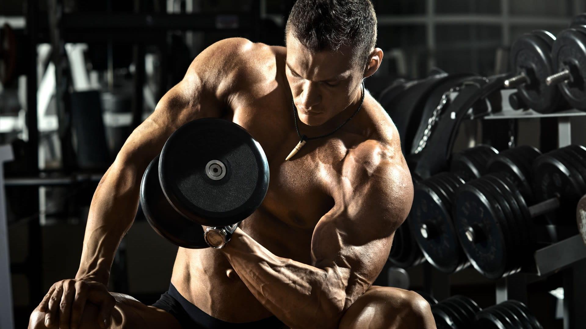 Anatomía del bíceps y del antebrazo | Cambiatufisico