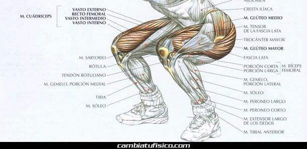 Anatomía del cuádriceps