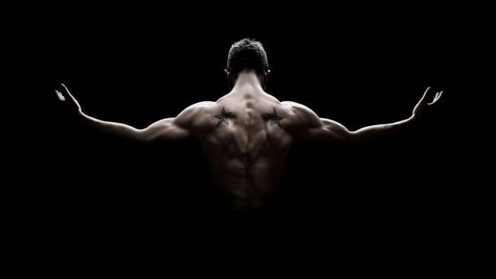 Anatomía de la espalda