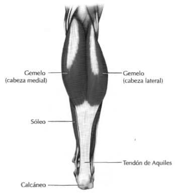 Anatomía de los Gemelos y el Sóleo | Cambiatufisico