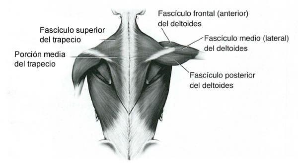Consejos y rutina para trabajar tus hombros de forma completa ...