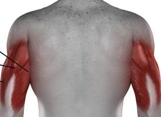 Anatomía del Tríceps