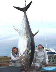 Atún gigante