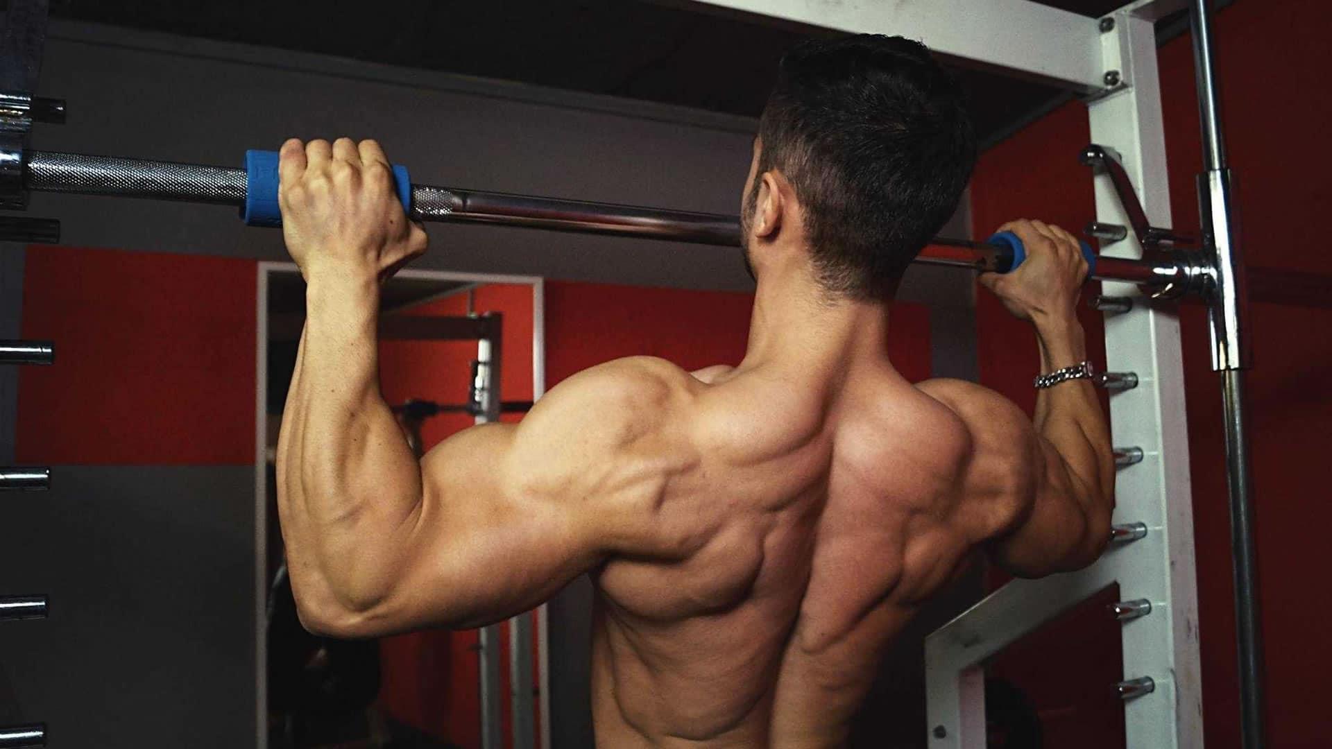 Anatomía de la espalda   Cambiatufisico
