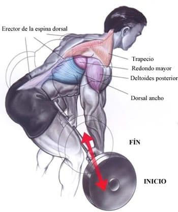Músculos remo con barra