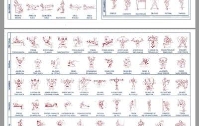 Rutina de gym para bajar de peso pdf