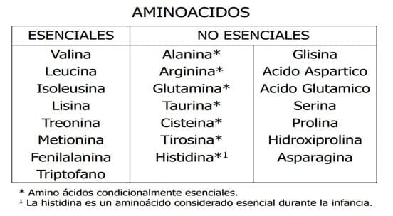 suplementacion con aminoacidos