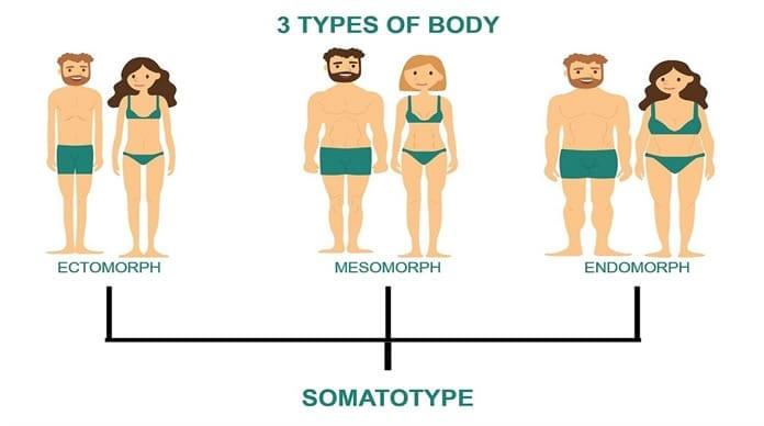 Tipos somáticos